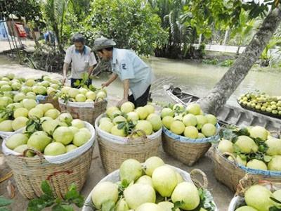 Công ty cung cấp trái cây sạch uy tín tại tphcm