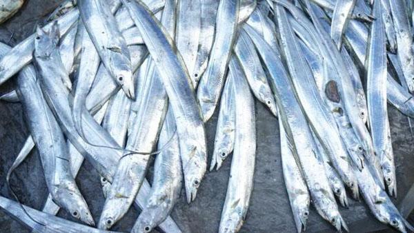 Cá hố biển Phú Yên